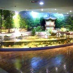 Indoor ponds aquarium manufacturers suppliers and for Indoor koi pond designs
