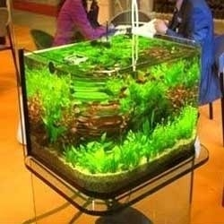 Moulded Aquarium