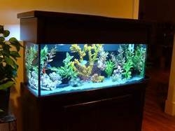 Artificial Coral Aquarium